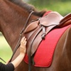 63% Off Private Horseback-Riding Lesson in Waller