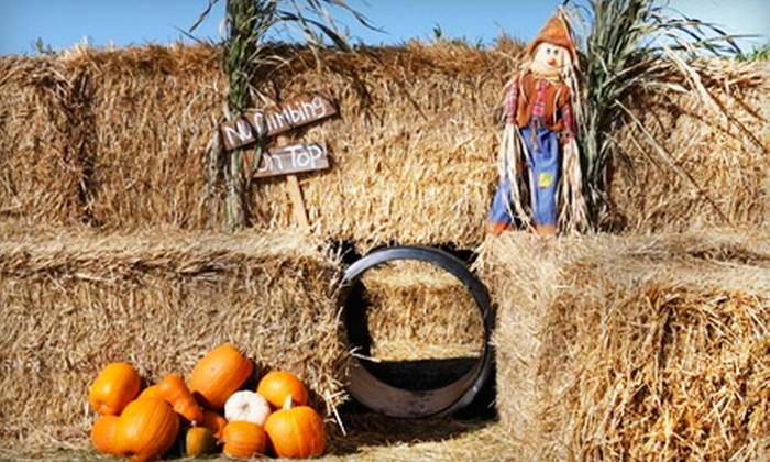 Airlie Hills Harvest Festival & Pumpkin Patch - Monmouth: Family Outings and Pumpkins at Airlie Hills Harvest Festival & Pumpkin Patch in Monmouth. Four Options Available.