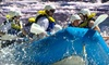 Wildwater - 3: White-Water-Rafting Tours for One, Two, or Six Passengers from Wildwater in Ducktown on the Ocoee River