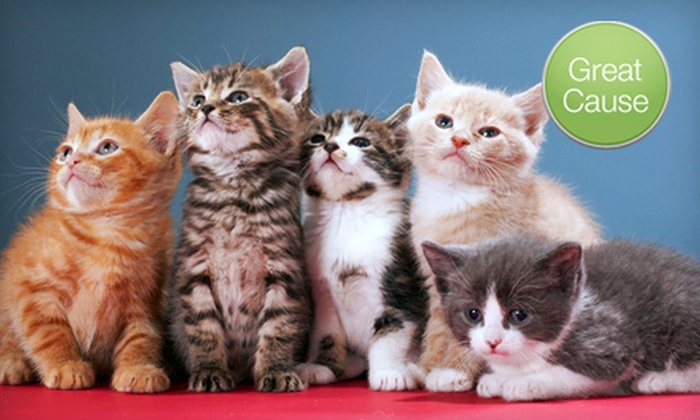 MeoowzResQ: $10 Donation for Rescued Cats