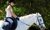 Traditional Equitation School (Los Angeles Equestrian Center) - Burbank: $68 for a Private Weekday Express Riding Lesson at Traditional Equitation School ($146 Value)