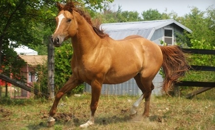 Five Star Ranch: One-Hour Trail Ride for Two - Five Star Ranch in Campbellville