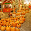 $10 for Admission to The Pumpkin Factory