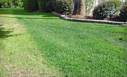 Lawn Fertilization and Weed and Insect Control for Up to 6,000 Square Feet (a $65 value) - Southern Green Turf Care in