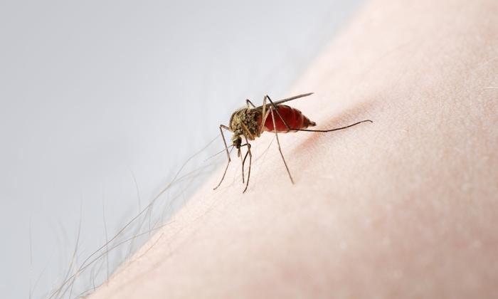Mosquito Joe of SW Houston - Houston: Mosquito Treatment from Mosquito Joe of SW Houston (51% Off). Two Options Available.