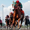 $10 for a Horseracing-Event Package at Emerald Downs