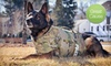 (Grassroots) Vested Interest in K9s, Inc. - Boston: $10 Donation for K9 Protective Vests