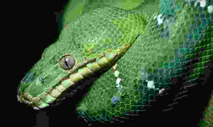 Repticon - Davis County Fairgrounds Legacy Event Center: $15 for a Reptile and Exotic-Pet Show for Two Adults and Two Children at Repticon ($30 Value)