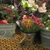 Up to 55% Off Holiday Wreath or Flowers in St. Albert