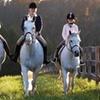 51% Off Horseback-Riding Lesson in Kirtland