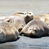 Up to Half Off Guided Kayak Tour in Moss Landing