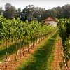 Half Off Winery Tour for Two in Gold Hill