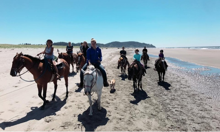 Up To 21 Off One Hour Beach Ride At West Coast Horse Rides