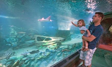 Sea Life Arizona Aquarium - Sea Life Arizona Aquarium in Tempe
