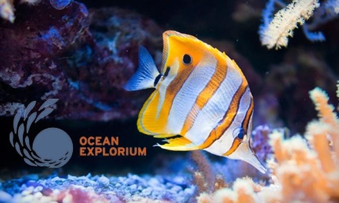 Ocean Explorium - New Bedford: $7 for Two General-Admission Tickets to the Ocean Explorium in New Bedford