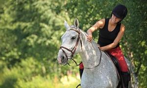 Pferdehof Dahlewitz: 4x Reitunterricht in kleinen Gruppen auf dem Pferdehof Dahlewitz (50% sparen*)