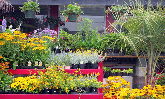 Deep Roots Garden Center - Hill Section: $20 for $40 Worth of Plants and Flowers at Deep Roots Garden Center
