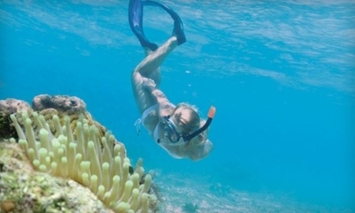 Tavernier Dolphin Cruises - Lucille Park: Sunset Cruise for Two or Four or Eco Snorkel Reef Tour for Two or Four from Tavernier Dolphin Cruises (Up to 55% Off)
