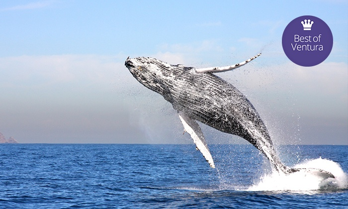 Channel Islands Whale Watching - Oxnard: Three-Hour Cruise for One, Two, or Four from Channel Islands Whale Watching (Up to 58% Off)