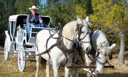 Mount Charleston Trail Rides - Mount Charleston Trail Rides in Las Vegas