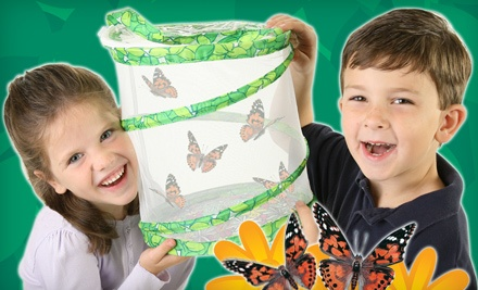 Insect Lore: Butterfly Garden with Live Caterpillars or Insects and Accessories - Insect Lore in