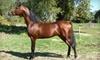 Tammy McDonald Training - Washington Trail: Group Horseback-Riding Lessons at Tammy McDonald Training in Newcastle. Choose Between Two Options.