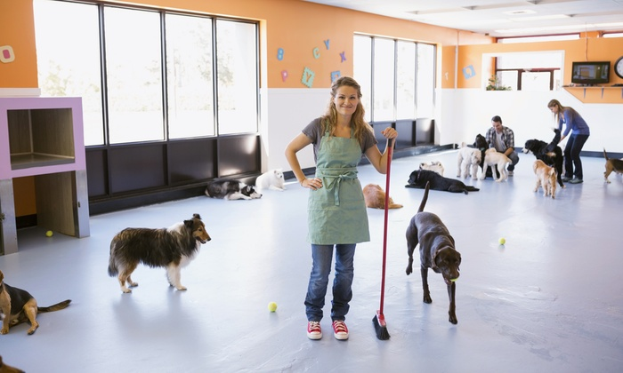 Noah's Bark - Noah's Bark: Five- or 10-Day Daycare Pass for One or Two Dogs at Noah's Bark (Up to 53% Off)