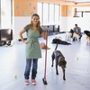 Up to 52% Off Dog Daycare and Boarding