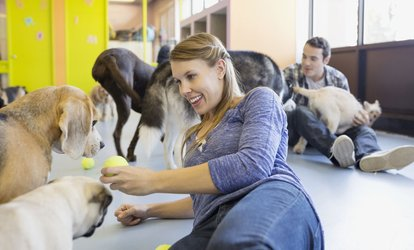 image for Doggie Day Care at Fusion <strong>Pet</strong> Retreat for 10 Days (50% Off)