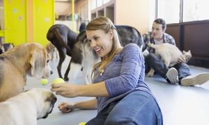 BIELSKA SZKOŁA DLA PSA: Szkolenie z podstawowych komend dla psa od 59,99 zł w Bielskiej Szkole dla Psa