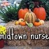 Half Off at Midtown Nursery