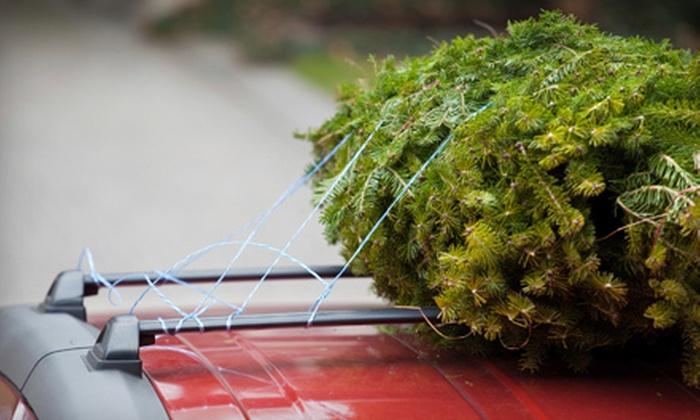 Ballyntyne Tree Farm - Salem: $10 for $20 Worth of Cut-Your-Own Christmas Trees at Ballyntyne Tree Farm