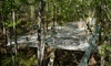 """Treetop Quest Gwinnett & Dunwoody - Gwinnett: $27 for """"Spider Quest"""" Harness-Free Obstacle Course for Two Plus Drinks at Treetop Quest ($44.52 Value)"""