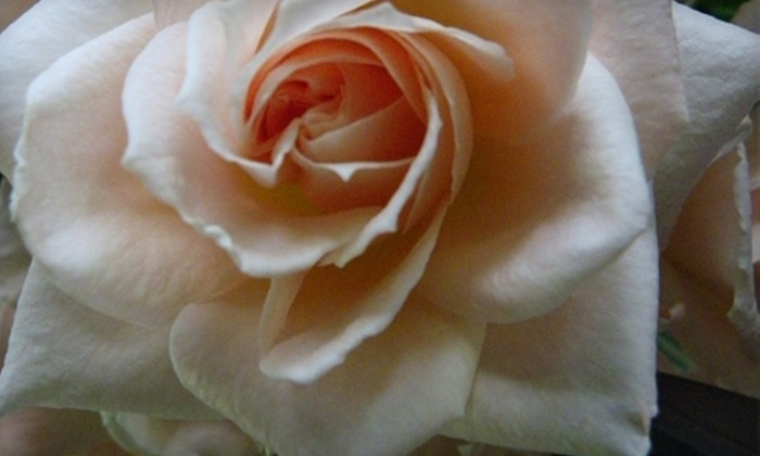 Roses for Autism: $25 for $50 Worth of Flowers from Roses for Autism