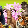 Half Off Wildlife Adoption in Thurmont