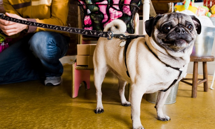 Walk on the Pawside - New York City: Three Days of Pet Sitting Services from Walk on the Pawside (50% Off)