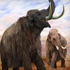 Anchorage Museum at Rasmuson Center – Half Off Mammoth-Exhibit Tickets