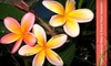 Tropica Mango Rare & Exotic Fruit Nursery - Multiple Locations: $15 for $30 Worth of Tropical Fruit Trees and Plants at Tropica Mango Rare & Exotic Fruit Nursery