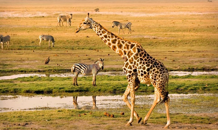 African Tour with Airfare - South Africa, Zimbabwe, and Botswana : 10-Day, 9-Night Tour of Southern Africa from Beyond Boundaries Travel with Round-Trip Airfare from New York (JFK)