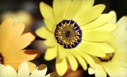 $40 Groupon to Millcreek Gardens - Millcreek Gardens in Salt Lake City
