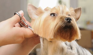 Amity Harbor Puppies: Grooming Services for a Small or Medium Dog at Amity Harbor Puppies (50% Off)