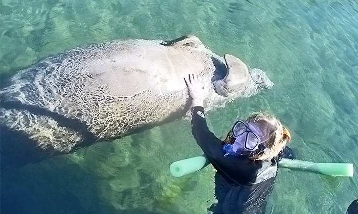 Nature Coast Manatee Tours - Homosassa: $299 for a Four-Hour Private Manatee Tour for Up to Six at Nature Coast Manatee Tours (Up to $600 Value)