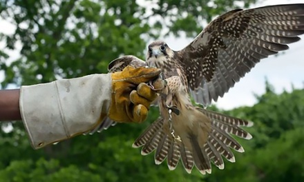 Three-Hour Raptor Encounter for One or Two at Birds of Prey Centre (Up to 70% Off)