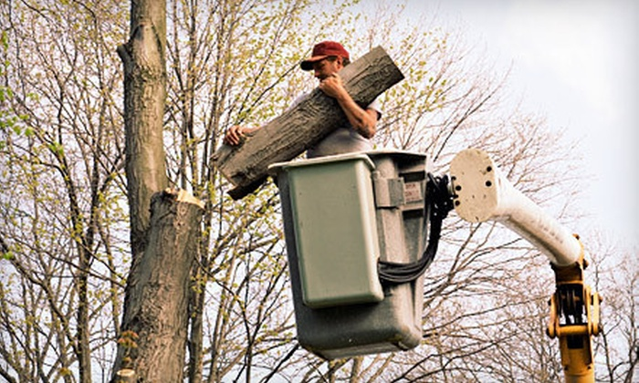 Good Earth - Dallas: $75 for Three Man-Hours of Tree Trimming, Tree Removal, or Stump Grinding from Good Earth ($225 Value)