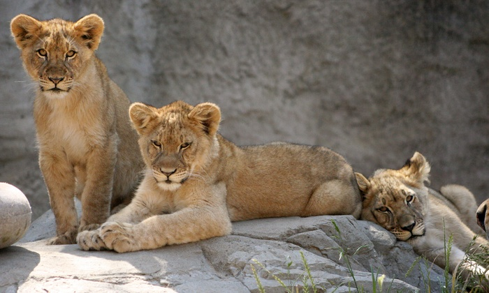 Sacramento Zoo - Southwestern Sacramento: $25 for Weekday Fun for Four with Rides at Sacramento Zoo (Up to $63 Value)