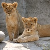 Sacramento Zoo – Up to 60% Off Zoo Fun-Day for Four