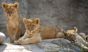 Sacramento Zoo: $25 for Weekday Fun for Four with Rides at Sacramento Zoo (Up to $63 Value)