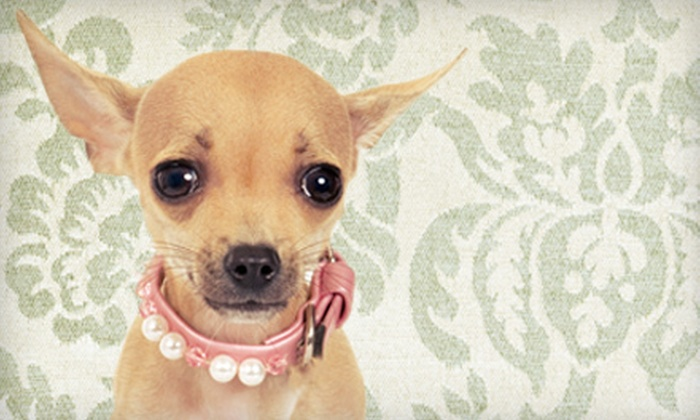 Canine Couture - Kingsville: $12 for $25 Worth of Goods for Dogs at Canine Couture