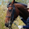 Up to 57% Off Horseback-Riding Lessons