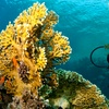 Up to 42% Off Introductory Scuba Course